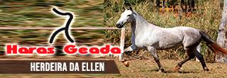 HERDEIRA - HARAS GEADA