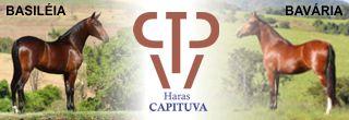 Haras Capituva