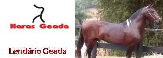 HARAS GEADA - LENDÁRIO GEADA