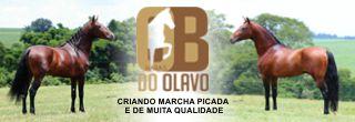 Haras do Olavo